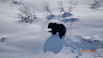 Bears wake up after hibernation in Kamchatka