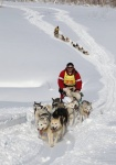 "Sled dog race ""Beringia"" will pass a new route from Kamchatka to Chukchi Peninsula"